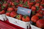 Erdbeeren Floretta