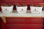 Erdbeeren Sander Verkaufsstand
